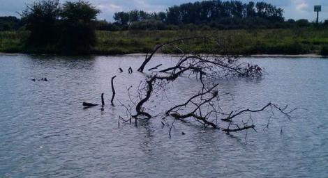 bomen in de rivier